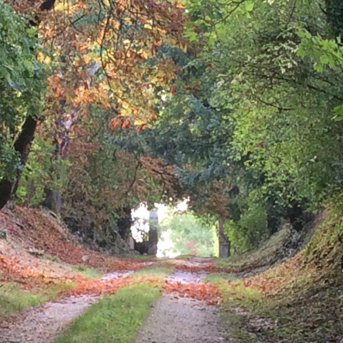 Lane cropped